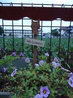 画像2: ガーデンピック大 トラネコ